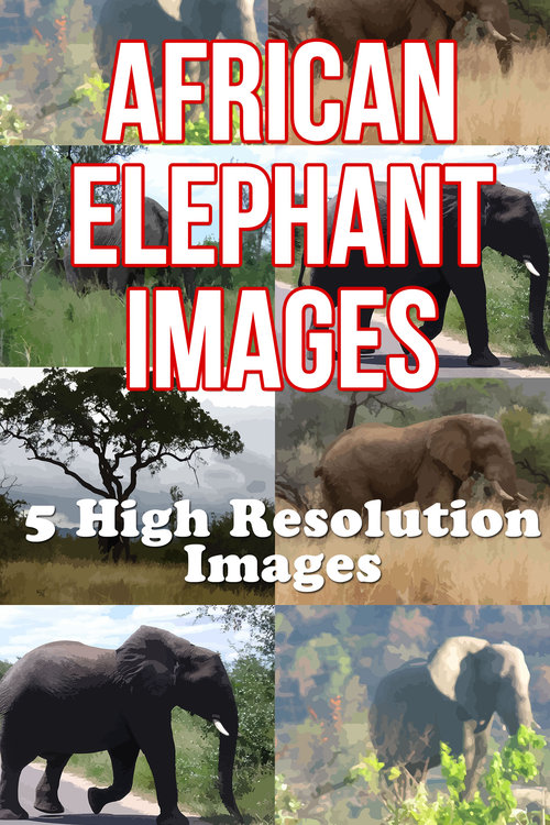 Product picture 5 High Resolution Africa Elephant Images, Southern Africa